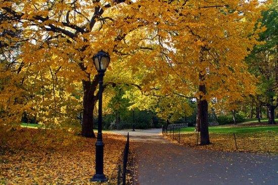 Autumn-in-NY-2